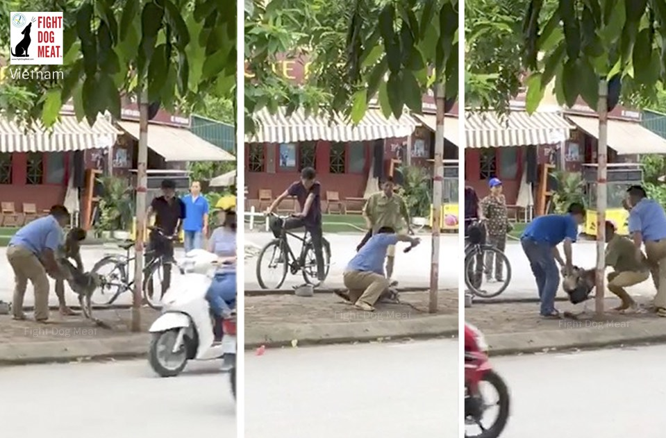 Vietnam: Bystanders Watched Helpless Dog Killed