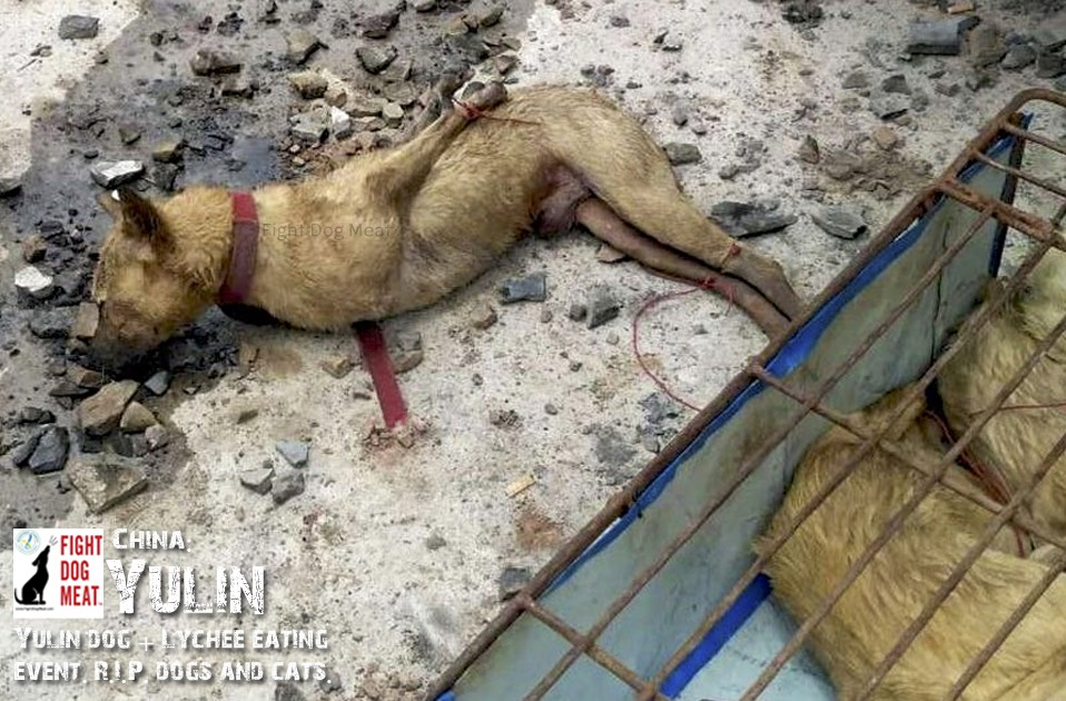 China: Yulin Annual Festival, 2019