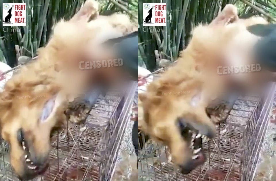China: Live Dog Dismembered For Meat