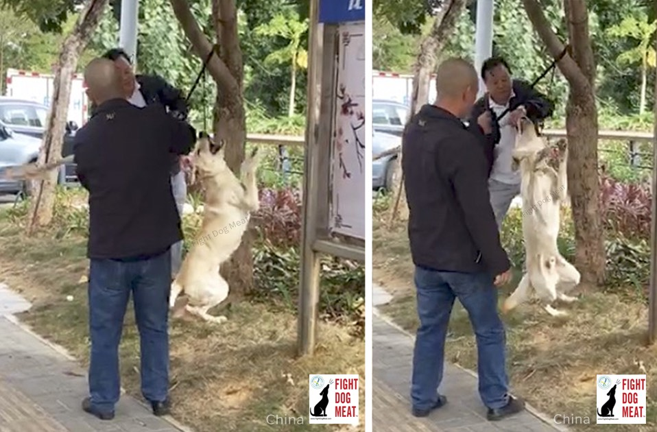 China: Live Dog Strung Up In Shenzhen
