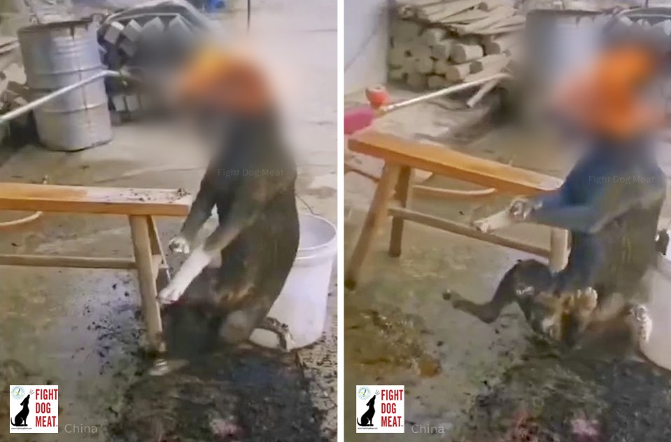 China: Butcher's Deliberate Cruelty