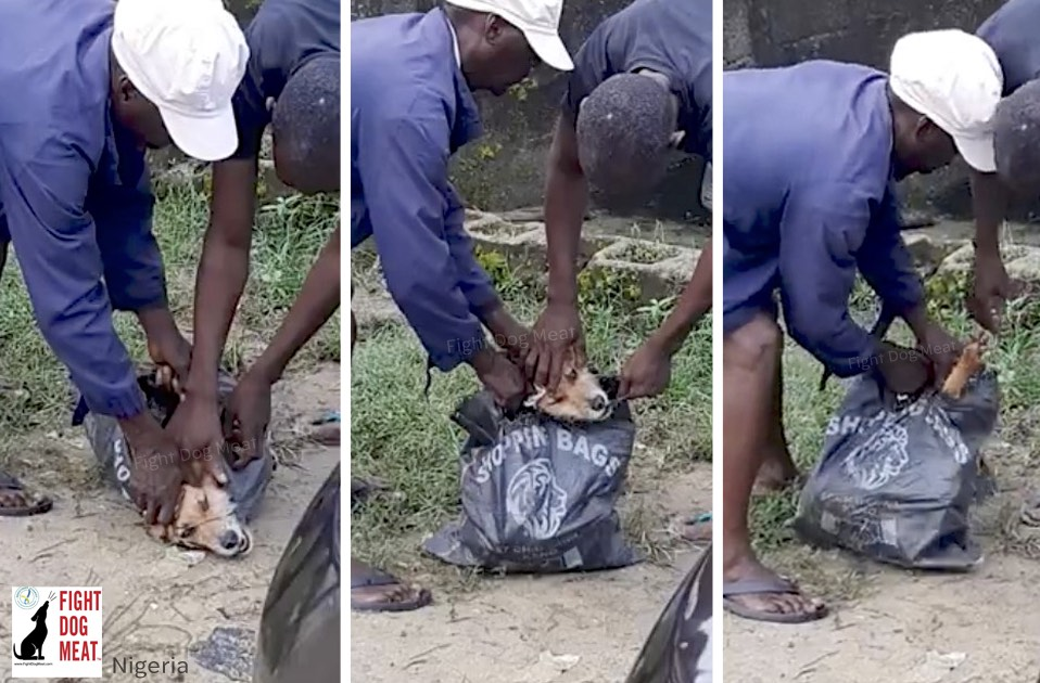 Nigeria: Selling Her Pet Dog To Be Eaten.