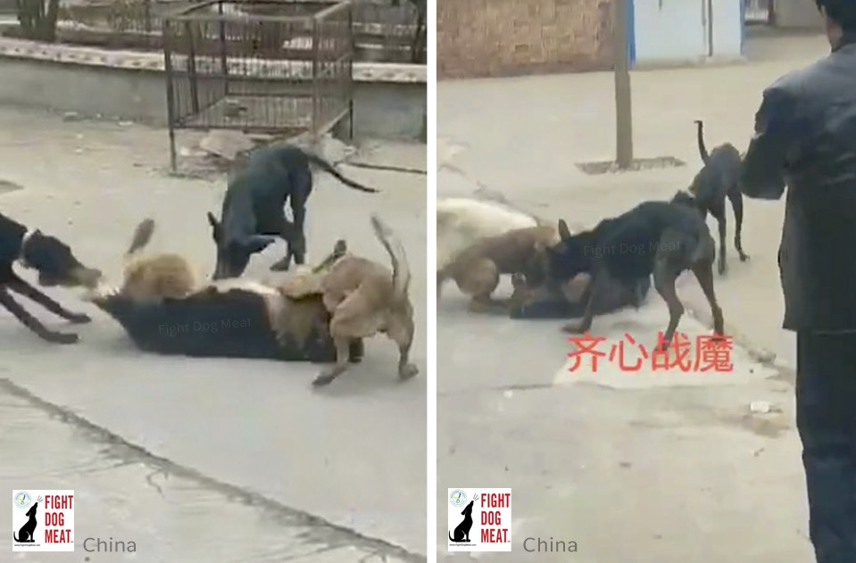 China: Abandoned Pets Torn To Pieces