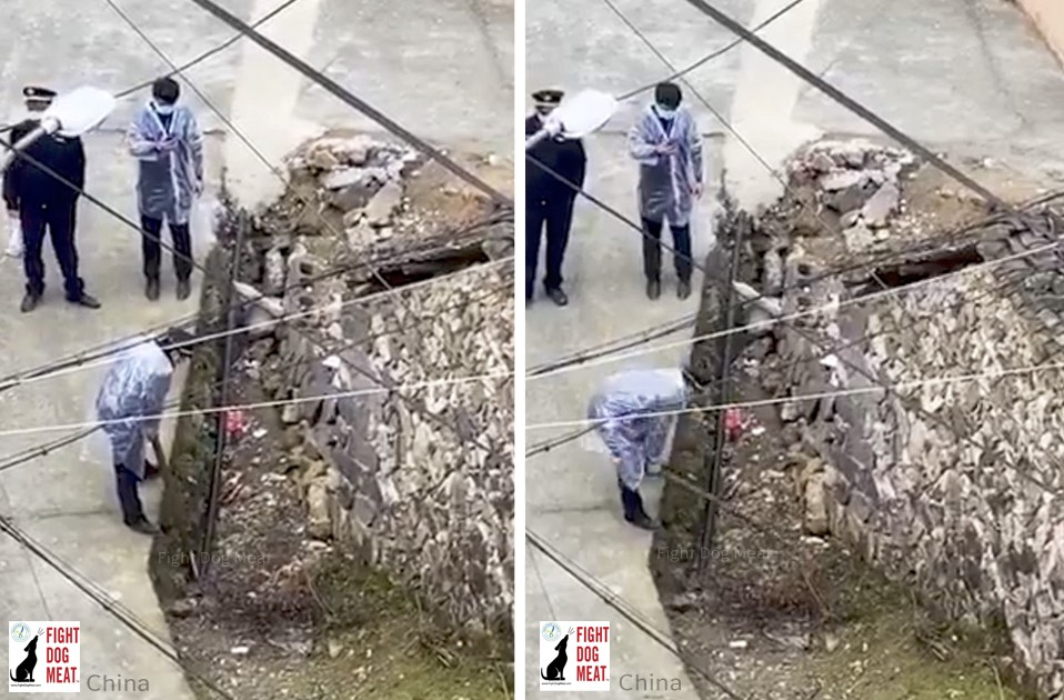 China: Dogs In Village Beaten To Death