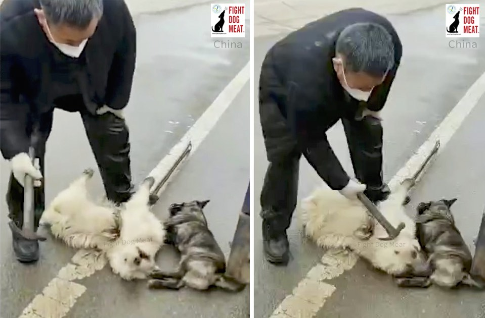 China: Bengbu City Cull Dogs In Anhui
