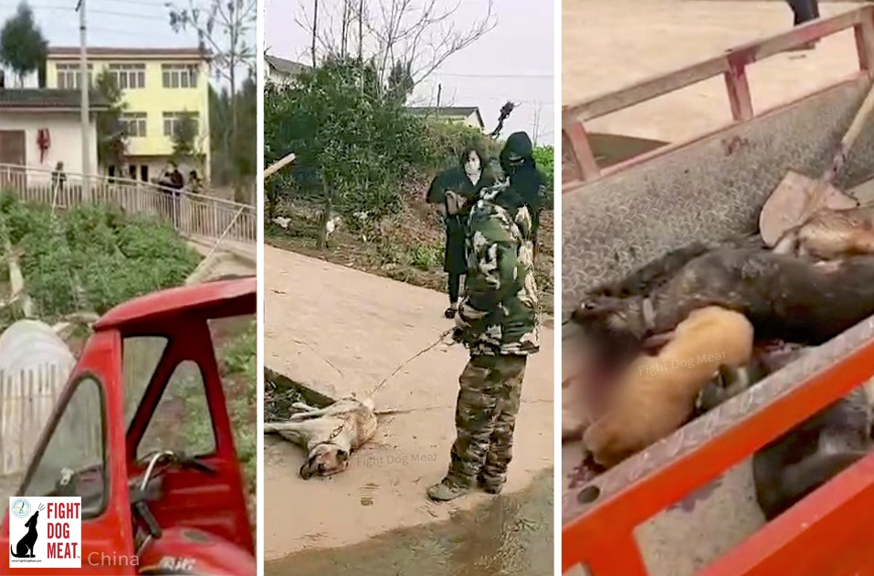 China: Sichuan Mass Dog and Cat Cull