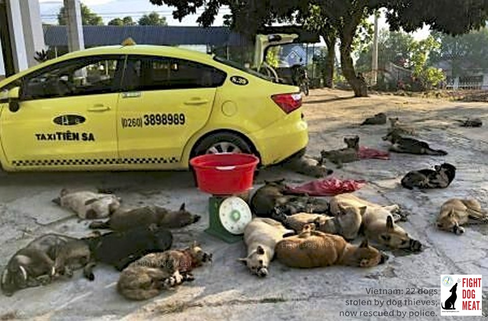 Vietnam: 22 Stolen Dogs Rescued By Police