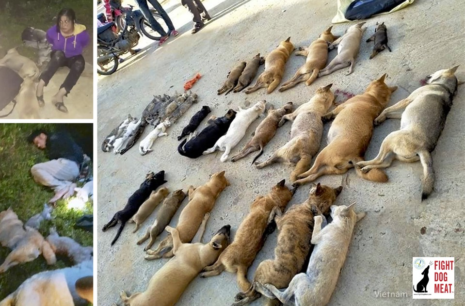Vietnam: Dog Thieves Steal 30 Dogs And Cats